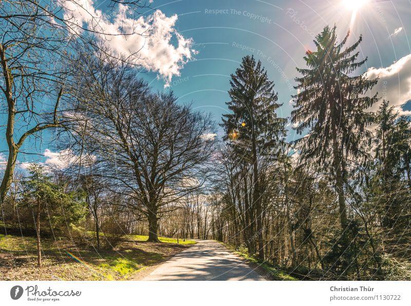 Karfreitagsspaziergang Himmel Natur Ferien & Urlaub & Reisen Pflanze Sommer Sonne Baum Erholung Landschaft ruhig Wolken Wald Umwelt Wärme Wiese Frühling