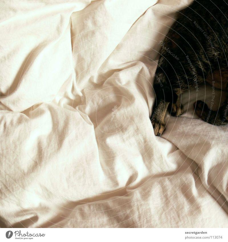 kuschelmonster Katze Bett Bettdecke weiß gestreift unordentlich Physik Pfote Schwanz Raum Design aufstehen Morgen schlafen kuschlig Kuscheln zusammengerollt