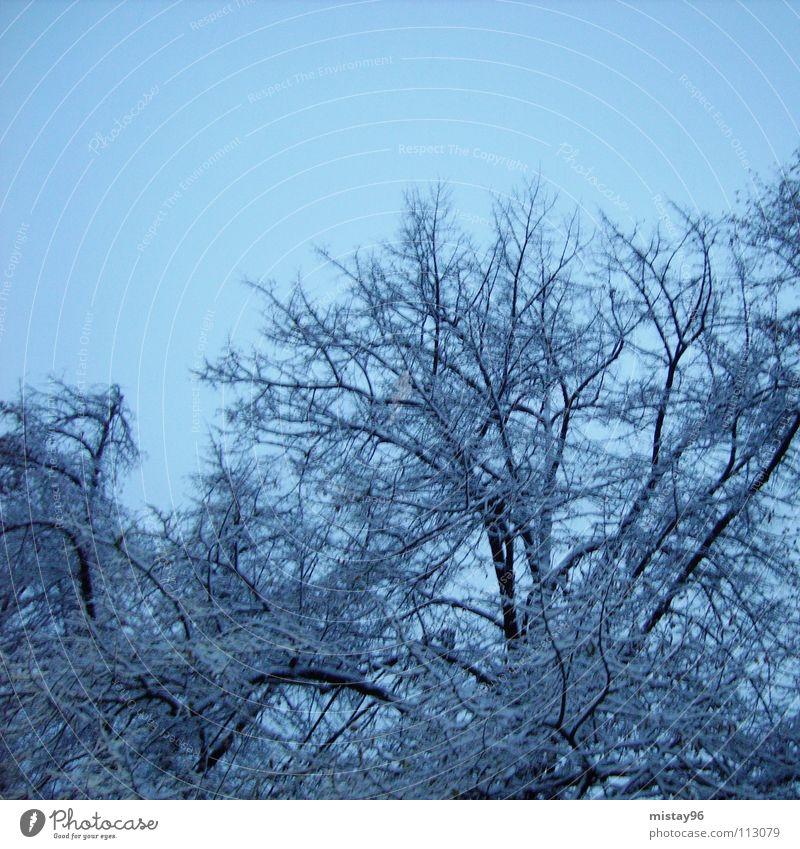 Winterstille Natur Himmel Baum blau Freude ruhig kalt Schnee Glück Zufriedenheit Klarheit