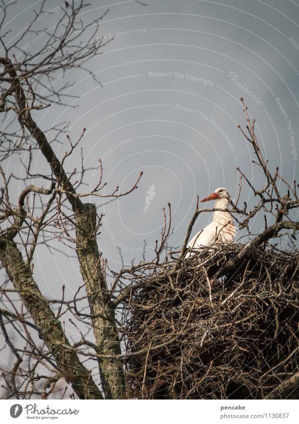 kinderwunsch Himmel Natur Baum Tier Frühling Vogel Wildtier Zeichen Urelemente Partnerschaft Erwartung Nest Nachkommen Storch Kinderwunsch