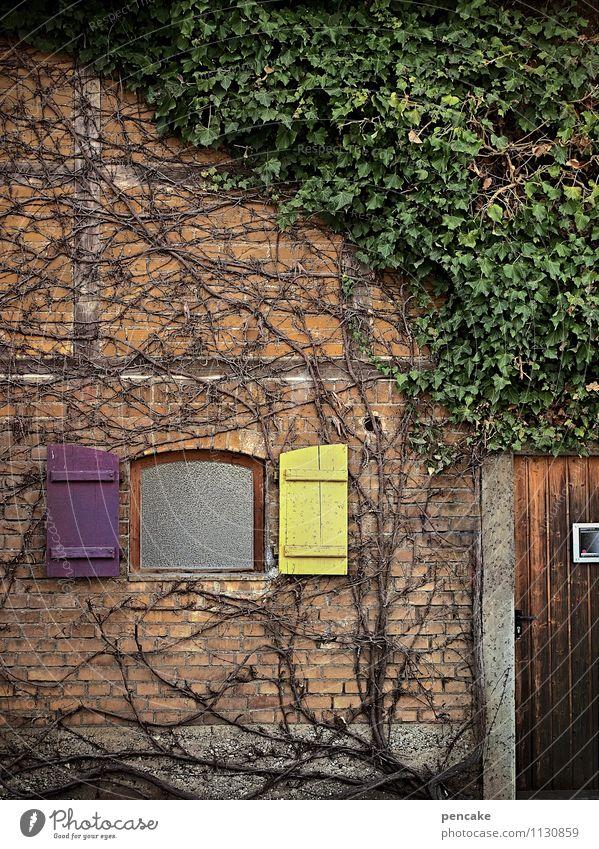landfein Natur Pflanze Efeu Dorf Haus Mauer Wand Fassade Fenster Tür authentisch natürlich retro Design Erholung Kultur Kunst Häusliches Leben Ranke Wurzel