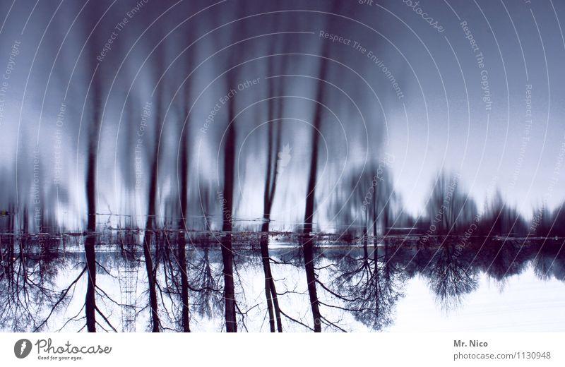 tagtraum Umwelt Natur Landschaft Flussufer See träumen Illusion Tagtraum Täuschung Irritation mystisch Baum kalt außergewöhnlich fantastisch bizarr Hochwasser