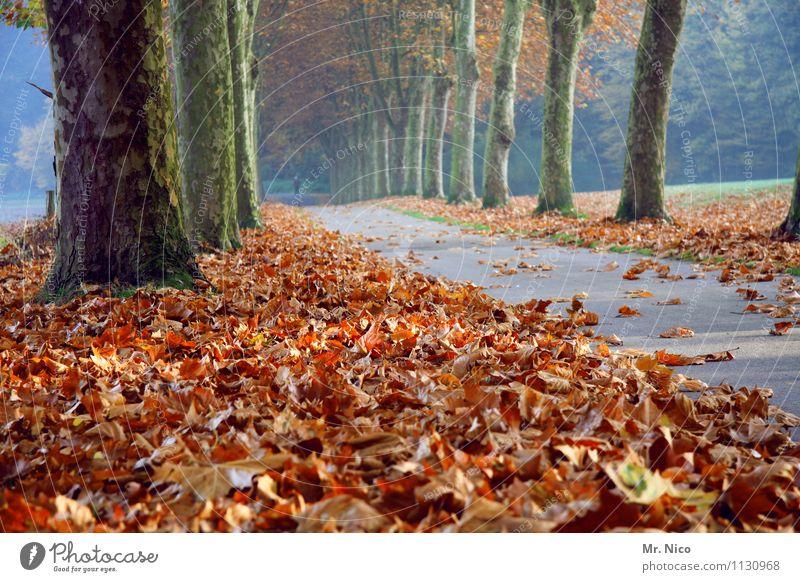 der nächste herbst kommt bestimmt Umwelt Natur Herbst Baum Blatt Straße Wege & Pfade Einsamkeit Herbstlaub Herbstfärbung Allee Spazierweg harmonisch Erholung