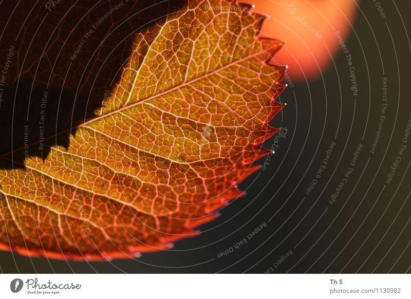 Blatt Natur Pflanze Frühling Blühend leuchten ästhetisch authentisch einfach elegant natürlich grün orange Gelassenheit geduldig ruhig Design Farbe einzigartig