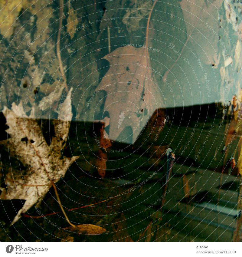 ::COLOUR IN THE CITY:: Herbst mehrfarbig Blatt Sturm nass Pfütze Haus Gebäude laublos Reflexion & Spiegelung Wohnung Baum Kunst Pforzheim Kunsthandwerk Wasser