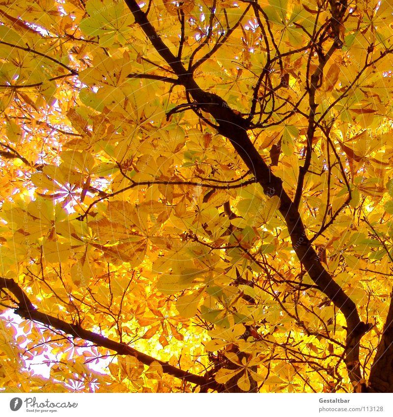 Herbstgeruch III Blatt gelb Baumstamm Kastanienbaum Baumkrone Rauschen Oktober Abschied Saison Jahreszeiten Vergänglichkeit gestaltbar fallen Lampe Ende gold