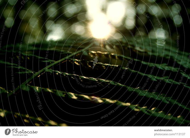 Farnblatt Sonne grün Sommer Blatt Wald dunkel Herbst Echte Farne Waldboden