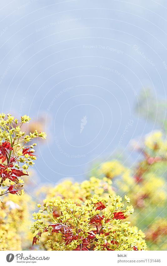 Frühling rot-gelb Himmel Natur Pflanze blau Sommer Blume ruhig Blüte Glück Garten Lifestyle Zufriedenheit Häusliches Leben Tourismus