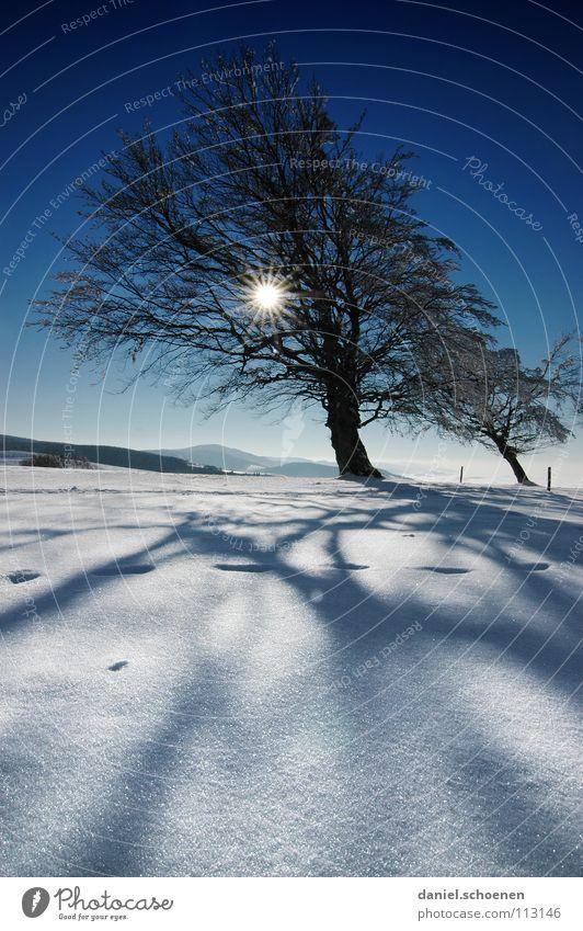 Weihnachtskarte 13 Himmel Natur blau weiß Baum Ferien & Urlaub & Reisen Sonne Winter Einsamkeit kalt Schnee Berge u. Gebirge Horizont Deutschland Wetter