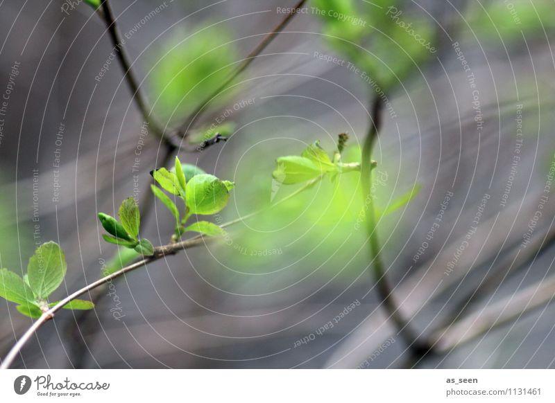 BÄMM Frühling! Natur Pflanze grün Baum Blatt Freude schwarz Umwelt Leben Gefühle natürlich grau Wachstum leuchten frisch