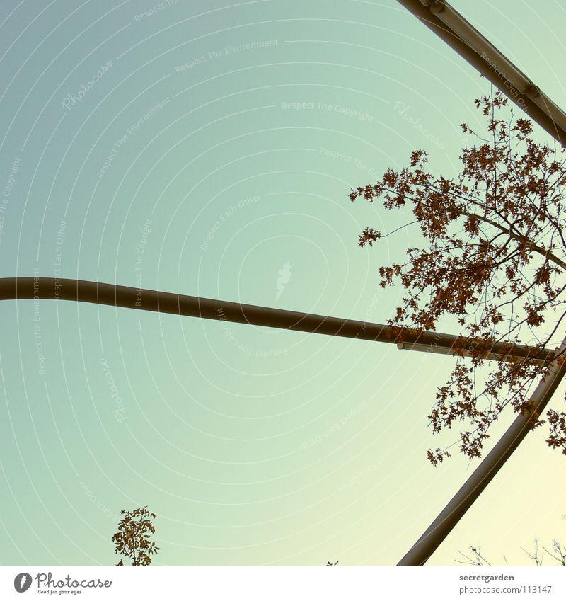 die dreibeinigen herrscher oder: lichtarchitektur IV Lampe dehydrieren Winter Blatt fallen Raum Froschperspektive Leuchtstoffröhre Stahl Kunst Sträucher
