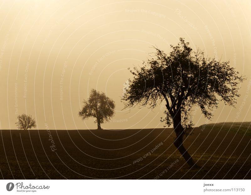 Drei im Nebel 3 Feld Baum Baumreihe braun Erholung Herbst Idylle Morgen Denken Nebelwand unklar Obstbaum poetisch Romantik ruhig Sonnenenergie Sonnenlicht