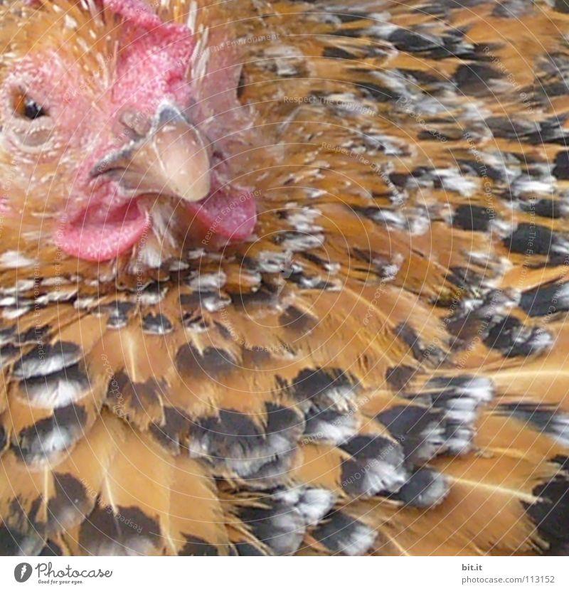 SCHLAFZIMMERBLICK Natur Tier ruhig Erholung Auge Auge Vogel fliegen Wildtier Lebensmittel Zufriedenheit frei Luftverkehr Ernährung Feder schlafen