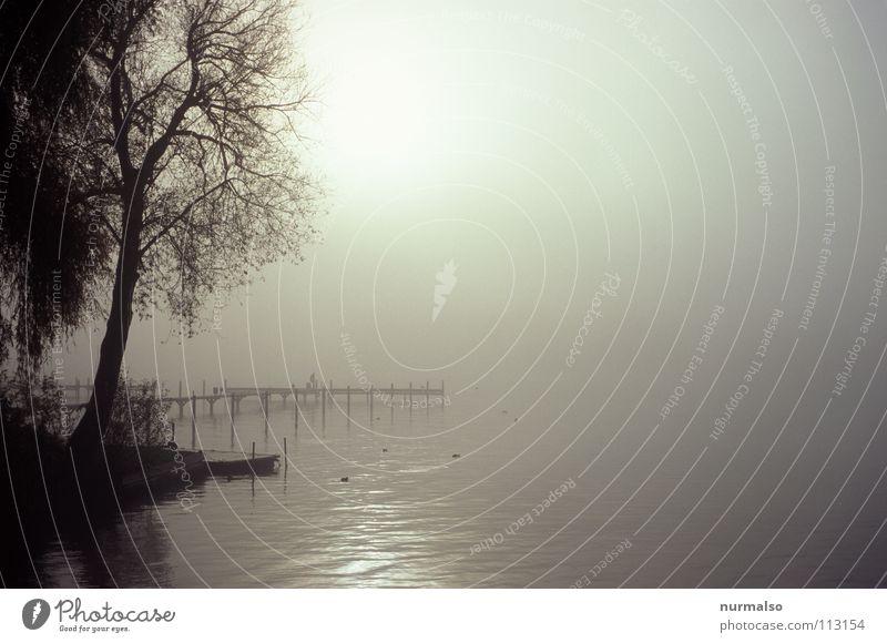 Nebel des Grauens 4 Hand Baum Sonne Winter Herbst grau Wasserfahrzeug Stimmung Vogel Angst leer Perspektive Fluss weich Ast