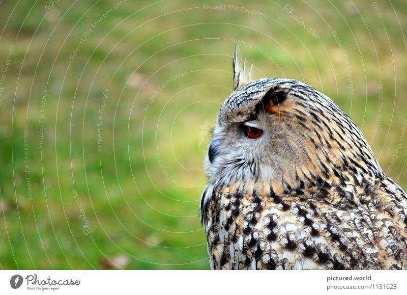 owl - silent flight Natur Erde Luft Schönes Wetter Tier Wildtier Vogel Tiergesicht Flügel 1 beobachten hocken Blick warten elegant grün schwarz weiß
