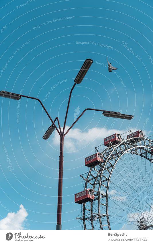 Landeanflug Himmel blau Wolken Tier grau fliegen Vogel Park frei Schönes Wetter historisch Straßenbeleuchtung Hauptstadt Wahrzeichen Stadtzentrum Jahrmarkt