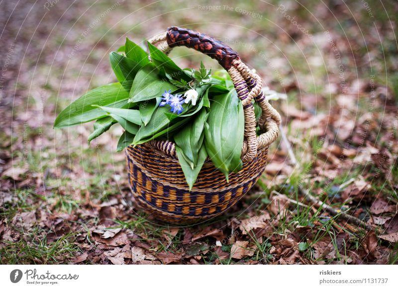 heut gibt's Bärlauchsüppchen ii Umwelt Natur Pflanze Frühling Wildpflanze Kräuter & Gewürze Wald Ärger Korb Blume Farbfoto Außenaufnahme Menschenleer Tag