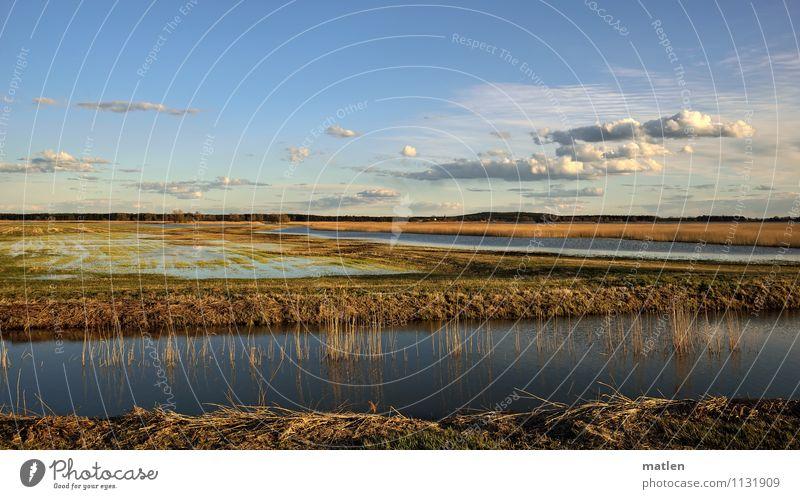 Schwemmland Natur Landschaft Pflanze Wasser Himmel Wolken Horizont Sonnenlicht Frühling Wetter Schönes Wetter Gras Wiese Küste Seeufer Flussufer Moor Sumpf