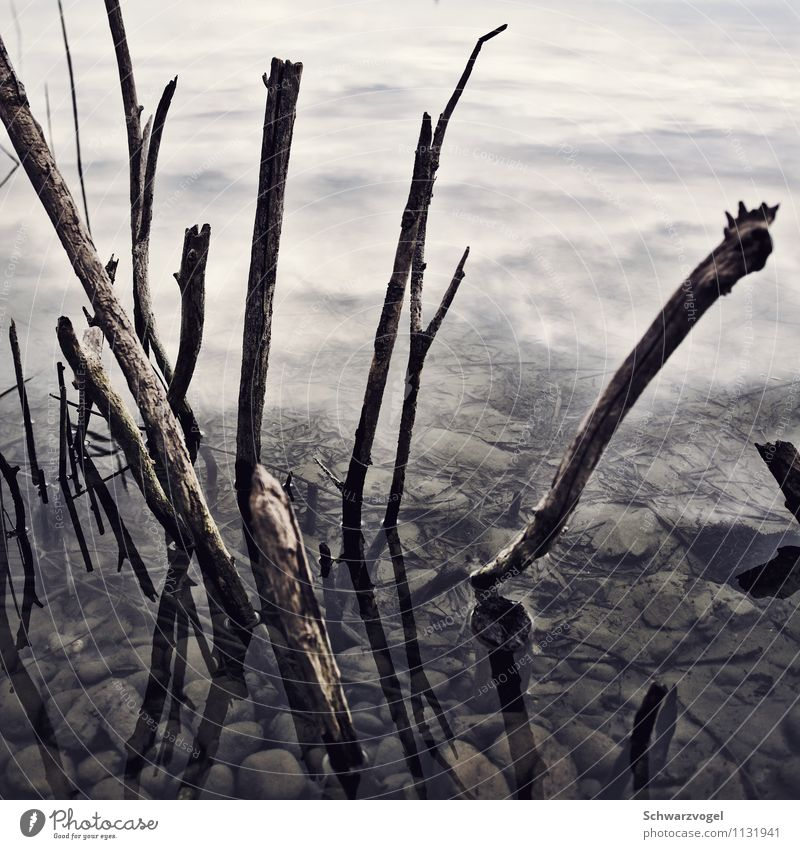 stick around Pflanze Wasser Umwelt Senior kalt Traurigkeit Tod Stimmung trist Vergänglichkeit nass kaputt Ast Vergangenheit Trauer trocken