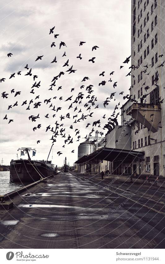 The Birds Industrie 1 Mensch Umwelt Flussufer Menschenleer Industrieanlage Fabrik Hafen Verkehrswege Güterverkehr & Logistik Schifffahrt Binnenschifffahrt