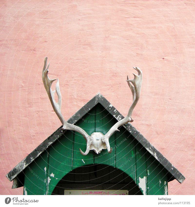das haus vom... Hirsche Haus Gebäude Horn Rentier Dachgiebel Trophäe Holzhütte Totes Tier Giebelseite Holzdach Vor hellem Hintergrund