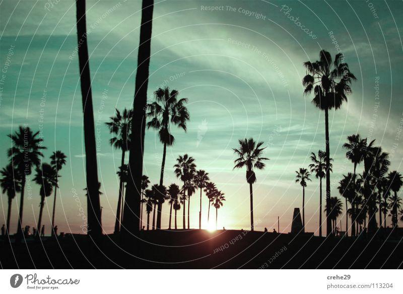 Bacardifeeling grün Sommer Ferien & Urlaub & Reisen Sonnenuntergang Palme schwarz dunkel Licht Gefühle Club Himmel landschaft.blau Erholung Schatten Natur