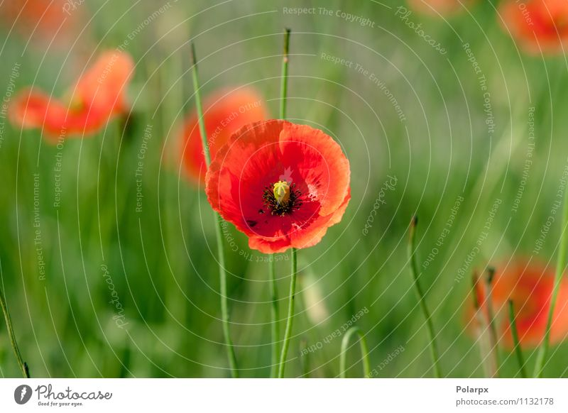 Himmel Natur Pflanze schön grün Farbe Sommer Blume rot Blatt Landschaft Wiese Blüte Gras natürlich Garten