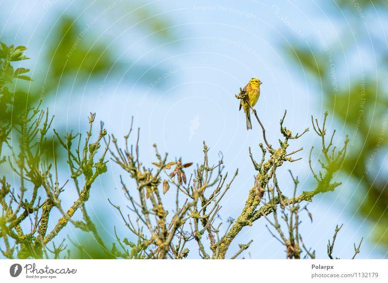 Natur grün Sommer Baum Tier Wald Umwelt gelb Herbst Blüte natürlich klein Vogel Park wild sitzen
