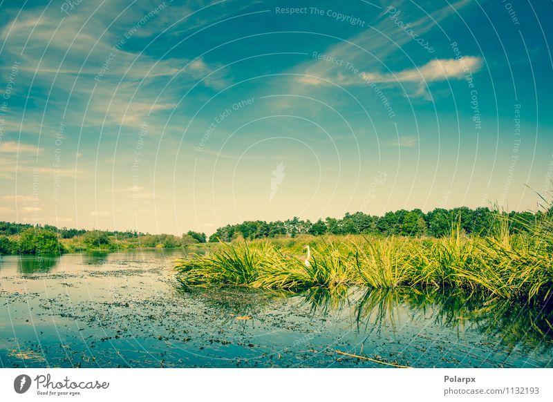 Himmel Natur Ferien & Urlaub & Reisen blau Pflanze schön grün Farbe Sommer Baum Blatt Landschaft Wolken Umwelt Gras natürlich