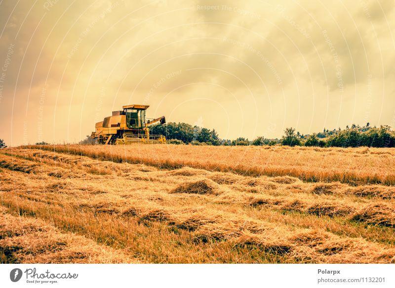 Harvester auf einem Feld Natur Pflanze Farbe Sommer Landschaft gelb Herbst Arbeit & Erwerbstätigkeit Wachstum gold Boden Ernte Bauernhof heiß Ackerbau Landwirt