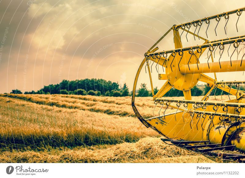 Harvester hinten auf einem Feld Sommer Arbeit & Erwerbstätigkeit Maschine Natur Landschaft Pflanze Herbst Wachstum heiß gelb gold Farbe orange Bauernhof reif