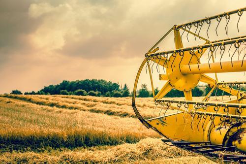 Natur Pflanze Farbe Sommer Landschaft gelb Herbst Arbeit & Erwerbstätigkeit Wachstum gold Boden Ernte Bauernhof heiß Ackerbau Landwirt