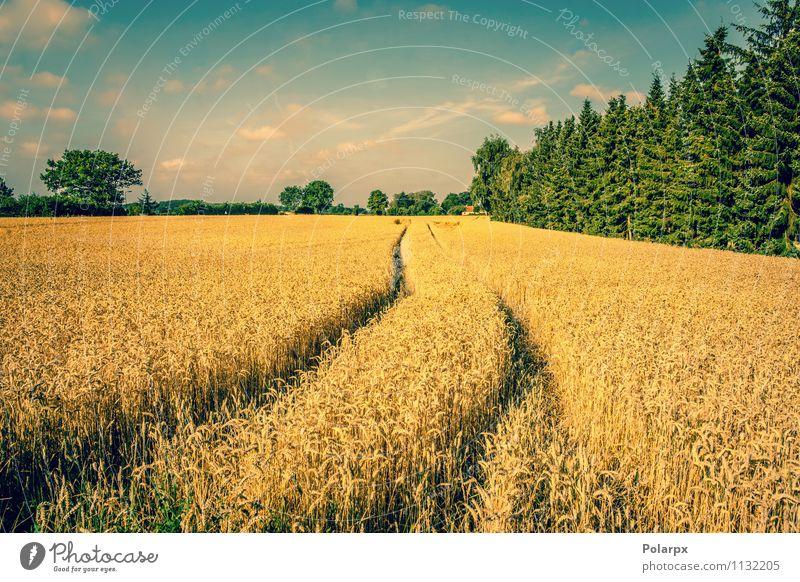 Himmel Natur Pflanze Sommer Baum Landschaft Wolken gelb Straße Herbst Wiese Wege & Pfade Erde gold Fußweg Jahreszeiten