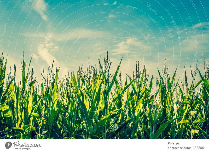 Himmel Natur Pflanze schön grün Farbe Sommer Baum Landschaft Wolken Wald Umwelt gelb Wiese Gras natürlich