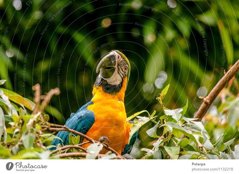 Natur blau schön grün Farbe Sommer Einsamkeit Tier gelb Vogel hell wild Feder sitzen Flügel Haustier
