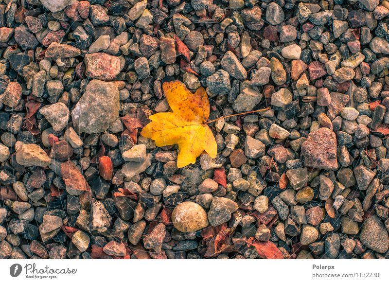 Gelbes Blatt im Herbst schön harmonisch Tapete Umwelt Natur Pflanze Wärme Baum Park Felsen frisch hell natürlich braun gelb gold rot Farbe Anhäufung Stapel