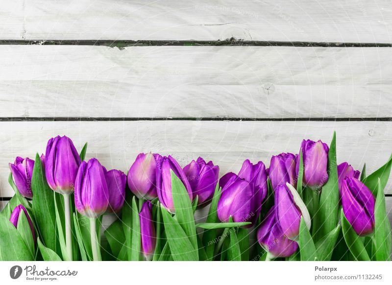 Tulpenblumen auf hölzernem Hintergrund Natur Pflanze grün schön weiß Blume Blatt Erwachsene Blüte Liebe Frühling natürlich rosa Wachstum frisch