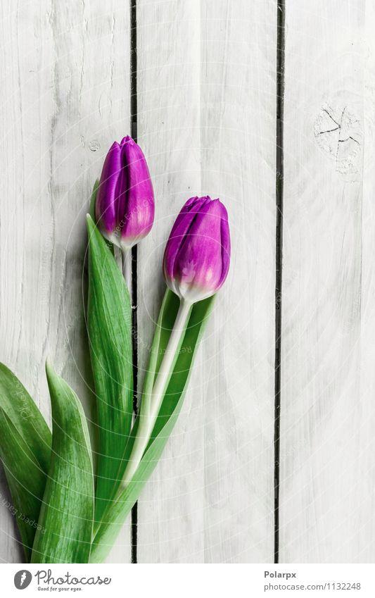 Tulip Blumen auf hellem Holz Natur Pflanze grün schön weiß Blatt Erwachsene Blüte Liebe Frühling natürlich rosa frisch Dekoration & Verzierung Geschenk