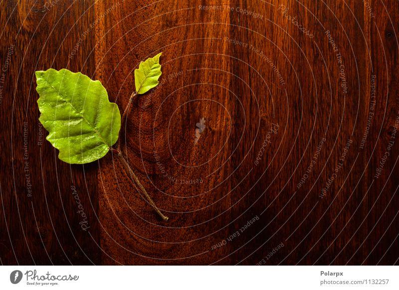 Grünes Blatt auf Holz Design Spa Garten Dekoration & Verzierung Kunst Natur Pflanze Baum Wald alt frisch natürlich braun grün Farbe Frühling Material Konsistenz