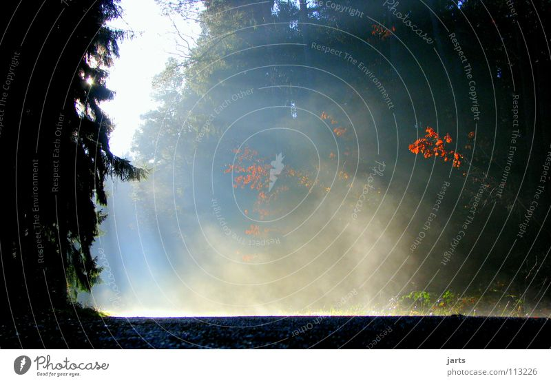 morgens Baum Sonne Straße Wald kalt Herbst Wärme Beleuchtung Nebel Physik Himmelskörper & Weltall