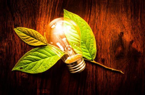 Natur Pflanze grün weiß Baum Blatt dunkel Umwelt natürlich Lampe hell Wachstum Energie Technik & Technologie Tisch Kreativität