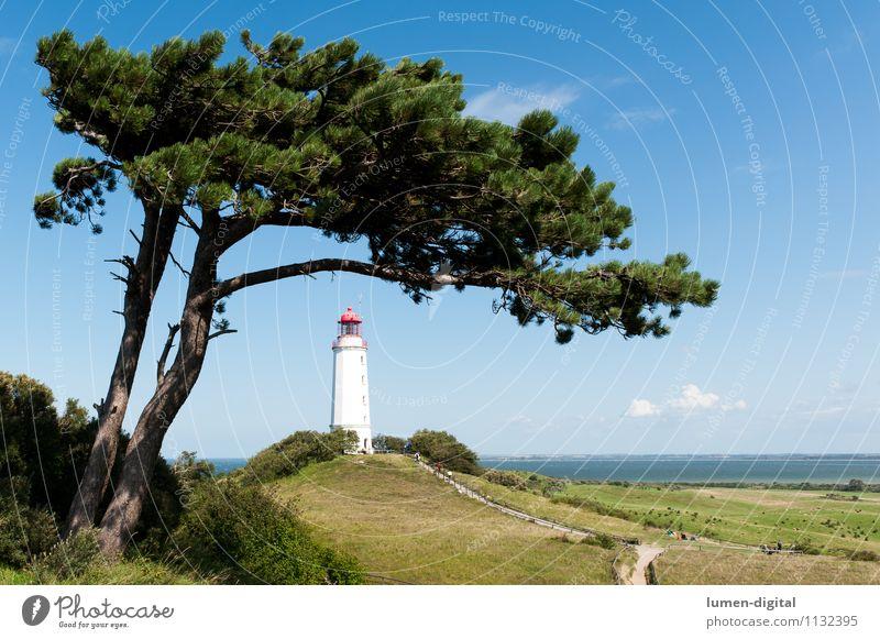 Leuchtturm auf Hiddensee Ferien & Urlaub & Reisen Tourismus Sommer Natur Landschaft Baum Kiefer Hügel Küste Ostsee Insel Deutschland Europa Turm Schifffahrt