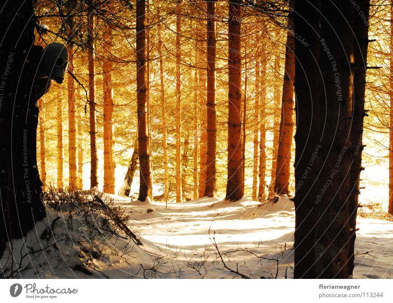 Orange Nightmare Stadt Furtwangen impulsive mysteriously powerfull darkness shining skylight forest