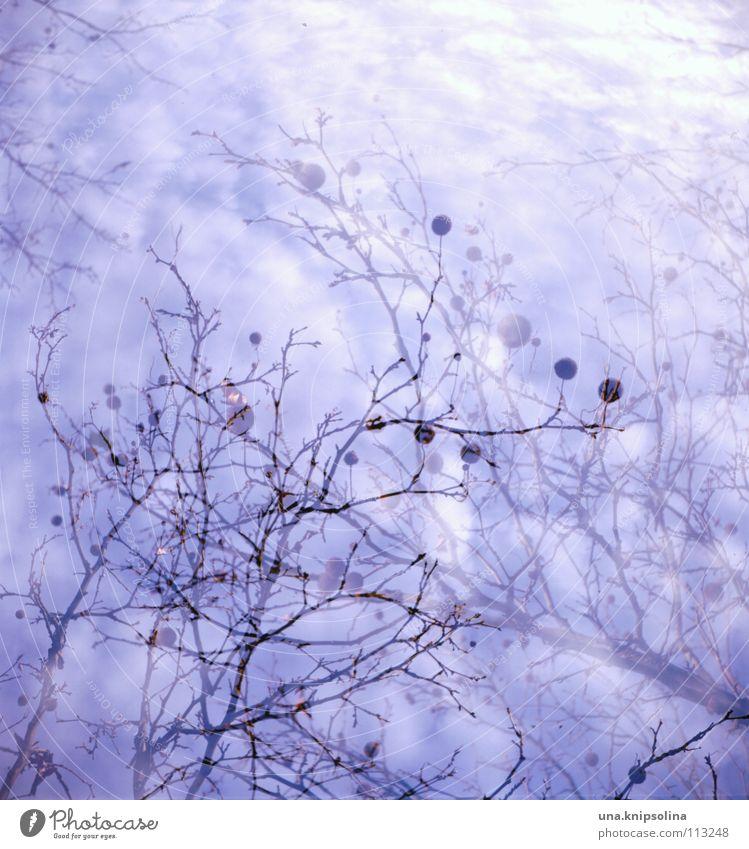 traumzauberbaum Himmel blau Baum Wolken kalt träumen Wetter Ast Zweig Baumkrone analog Doppelbelichtung Irritation Geäst Mittelformat Möwe