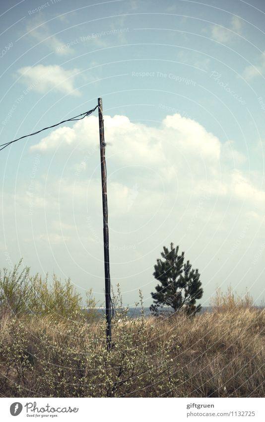 da steh' ich nun... Umwelt Natur Landschaft Pflanze Urelemente Sand Wasser Himmel Wolken Sonne Sommer Klima Wetter Schönes Wetter Baum Gras Küste Strand Ostsee