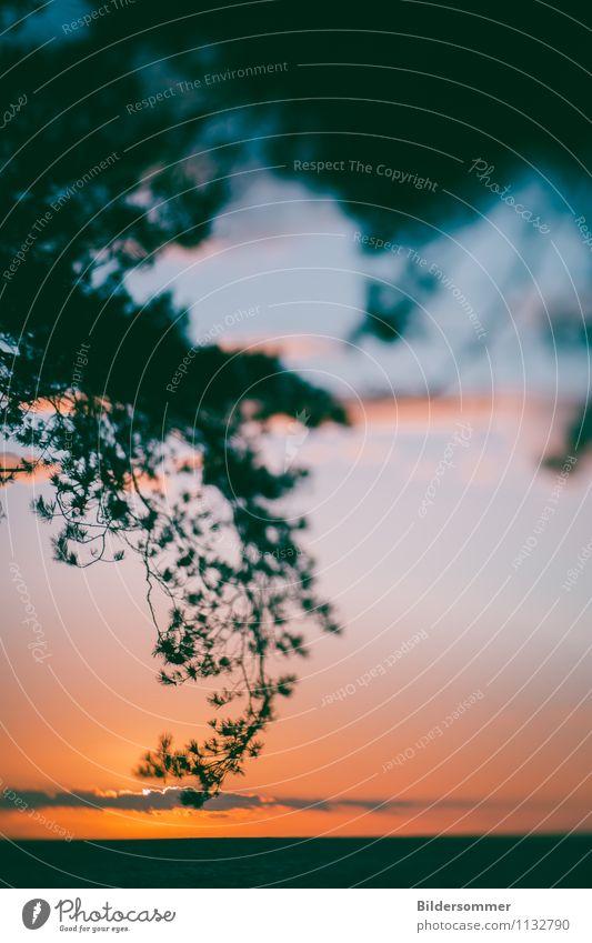 . Himmel Natur Ferien & Urlaub & Reisen Pflanze Sonne Baum Erholung Meer ruhig Strand Küste Glück Freiheit Horizont Zufriedenheit Idylle