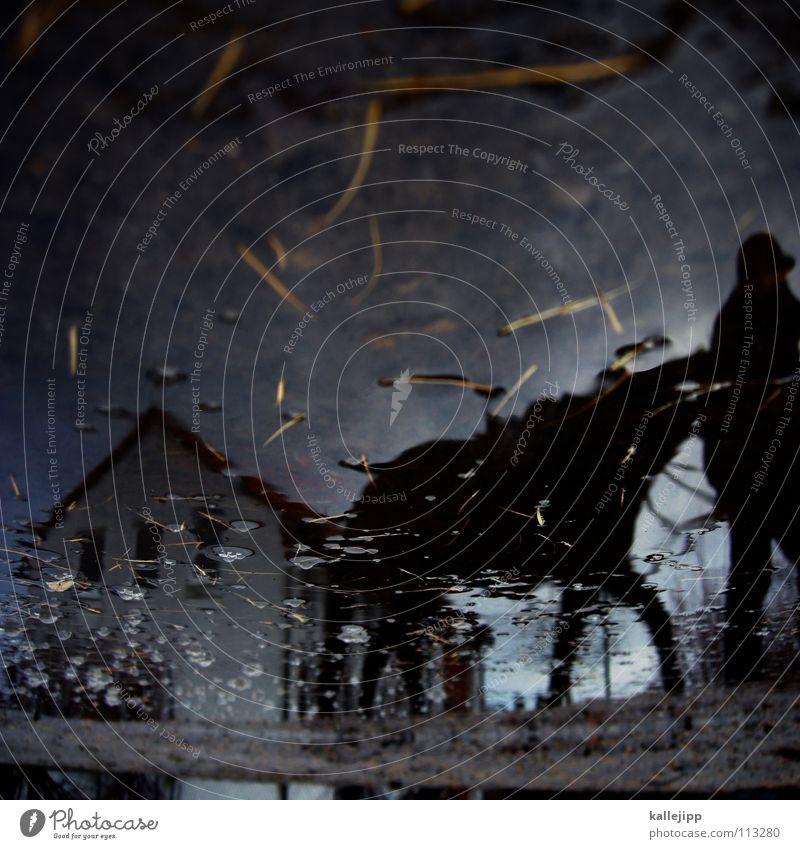 der erlkönig Pferd Reiterhof Bauernhof Ferien & Urlaub & Reisen Freizeit & Hobby Tier Ausritt Nutztier Pfütze Reflexion & Spiegelung Stroh nass November kalt