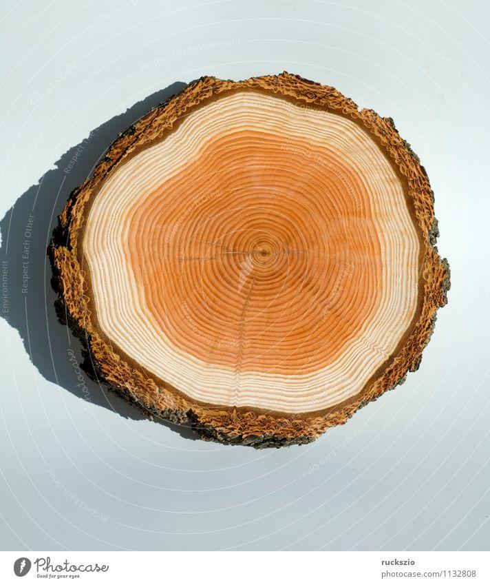 Jahresringe, Holzscheibe Baum frei braun weiß Jahrring Holzring Maserung ringfoermig Kambiumring Laerchenbaumscheibe Baumscheibe Lärche Baumstamm