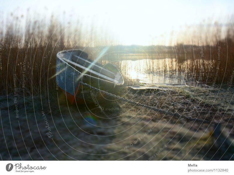 Heimweh Umwelt Natur Landschaft Erde Wasser Sonne Sonnenaufgang Sonnenuntergang Sonnenlicht Winter Gras Schilfrohr Röhricht Küste Seeufer Teich Ruderboot