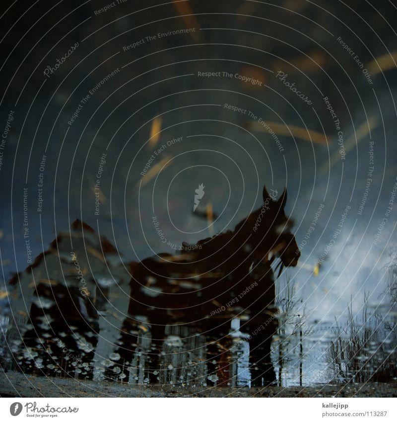 kein wildschwein und keine kuh Natur Ferien & Urlaub & Reisen Wasser Wolken Tier Haus Fenster kalt Glück Regen Wetter Freizeit & Hobby laufen nass Pferd